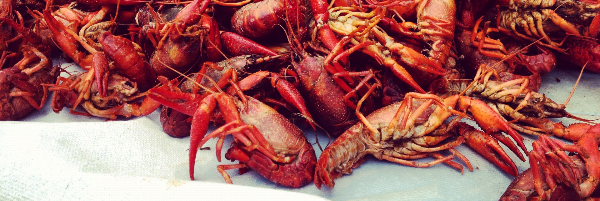 Galveston Crawfish